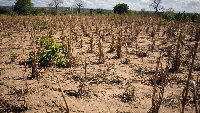 afrika sult